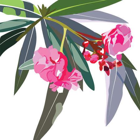 subtropics: Tropic flowers branch Vector card. Tropic Exotic floral background Illustration