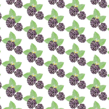 blackberry: Blackberry Vintage pattern Vector. Watercolor retro dotted background