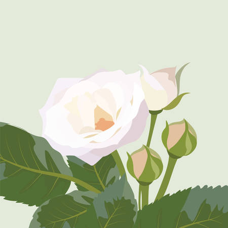 Delicate white Rose isolated. Vector rose flower for background greeting cards and invitations of the wedding, birthday, Valentines Day, Mothers Day