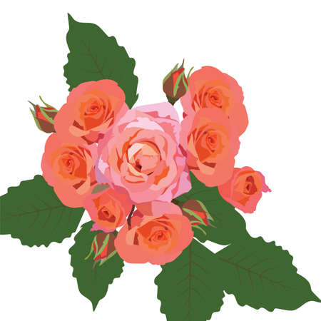 Delicate Pink Roses bouquet isolated. Vector rose flower for background greeting cards and invitations of the wedding, birthday, Valentines Day, Mothers Day