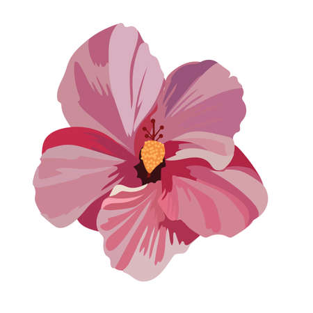 beautiful red hibiscus flower: Tropical pink flower isolated on white Vector Illustration