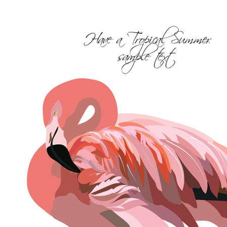 subtropics: Flamingo bird isolated on white background Vector. Summer tropic card Illustration