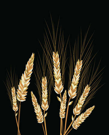 wheat isolated: Wheat isolated on black Vector Illustration