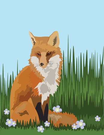 Fox in the field Vector illustration Illustration