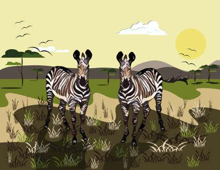 Two Zebras Vector Illustration. Wild Nature background