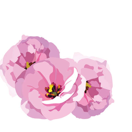 Watercolor Pink Rose flowers isolated. floral border for background greeting cards, invitations, weddings, birthday, Valentines Day, Mothers Day
