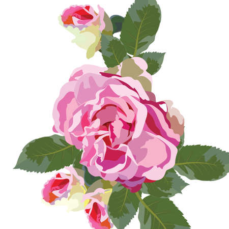 rosebud: Vintage Watercolor Pink Rose flowers isolated. floral border for background greeting cards, invitations, weddings, birthday, Valentines Day, Mothers Day