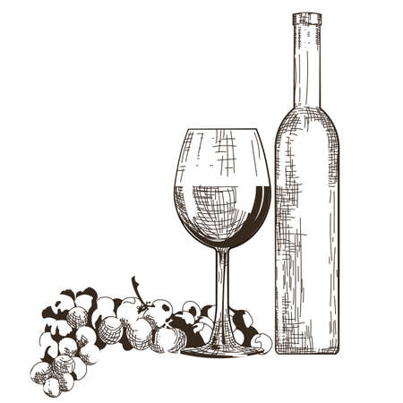 nostalgy: Bottle and Glass of Red wine with grapes isolated on white background Vector. Hand drawn engraving sketch illustration