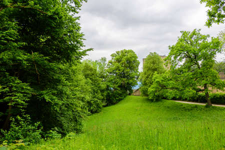Fresh green Forrest meadow and blooming flowers springtime. Salzburg, Austria Stock Photo