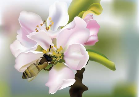 Kirsche blüht realistische Vektorillustration mit der Biene, die Blütenstaub sammelt. Schöner Frühling Blumenhintergrund