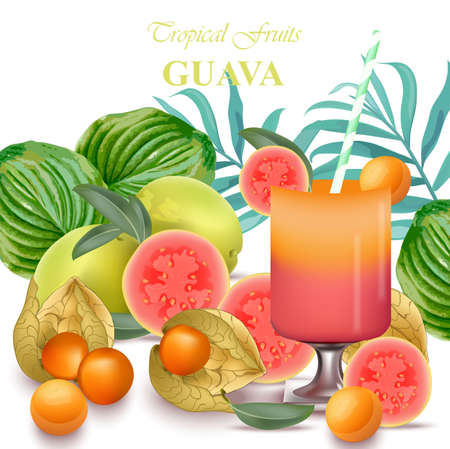 Smoothie Guava and gooseberry fruits realistic Vector fresh juicy exotic