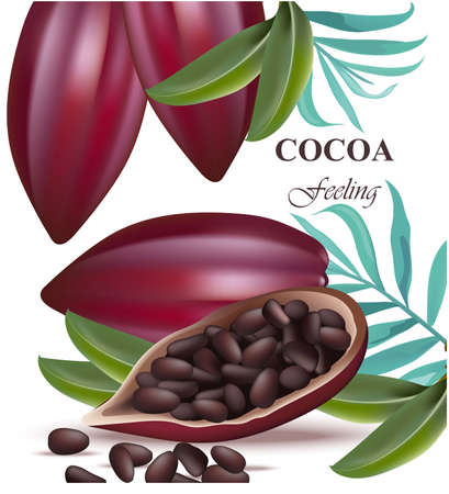 Cocoa beans realistic detailed Vector exotic