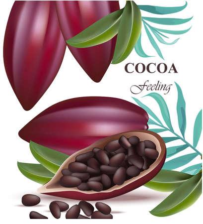 Cocoa frijoles realista detallado Vector exóticos Foto de archivo - 82952865