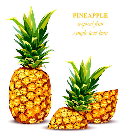 Pineapple fruit Tropical style card. Vector illustrations