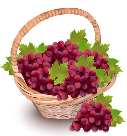 Red cardinal grapes in a basket Illustration