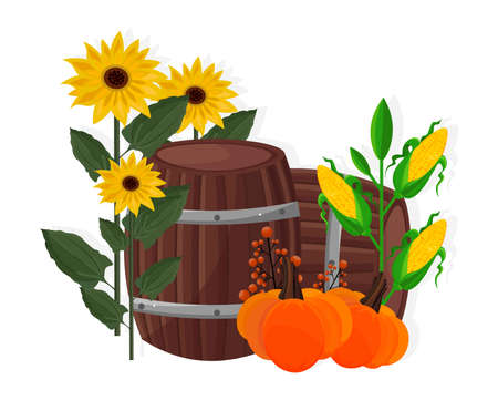 Autumn harvest sunflower, corn, pumpkin and barrel Vector Stock Photo