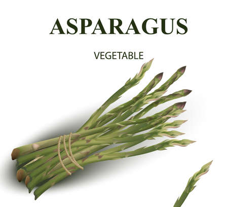 Asparagus isolated on white illustration.