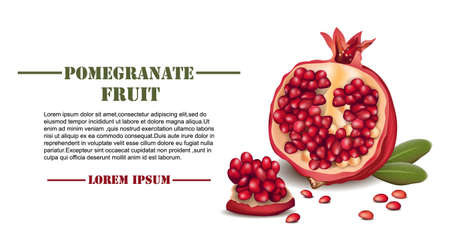 Pomegranate realistic Vector isolated on white background with place for texts