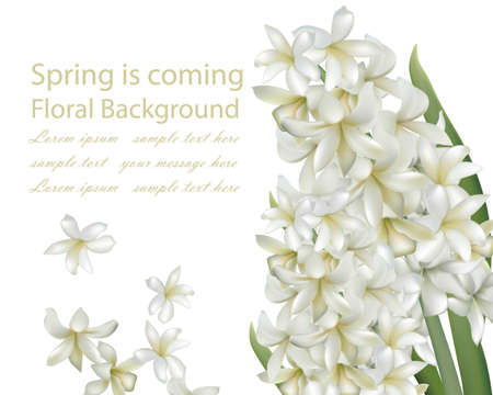 hyacinth white flower bouquet isolated background Vector realistic. Spring is coming card 3d illustration