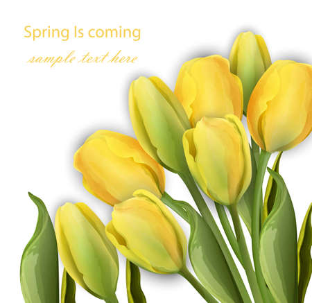 Yellow Tulip flowers on white background Vector realistic illustration