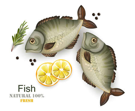 Fresh fish isolated on white vector realistic. 3d illustrations