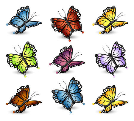 Colorful butterflies set collection. Vector detailed illustration.