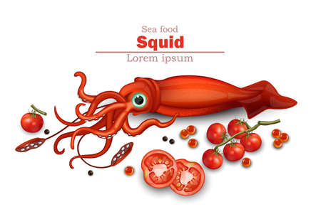 Squid isolated on white Vector. Seafood card background illustration Illustration