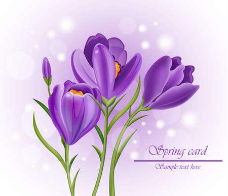 Crocus ultra violet flowers bouquet vector illustration