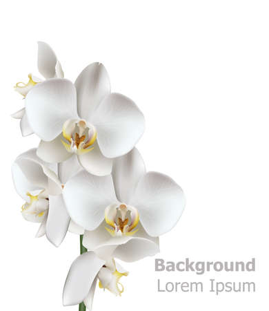 Realistic White orchid flowers Vector. 3d illustration isolated on white
