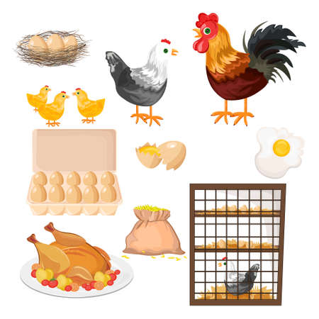 Eco farming. Rooster, chicken and eggs pattern Vector Illustration