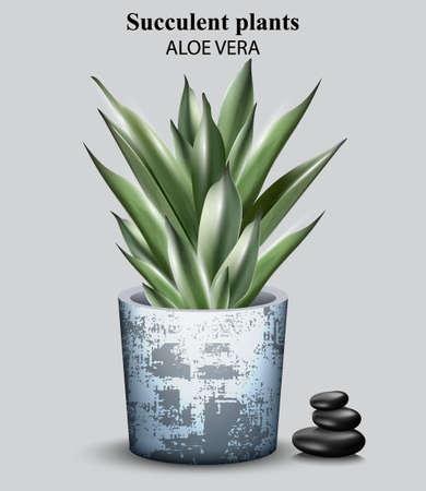 Aloe vera plant Vector. detailed illustration designs Illustration