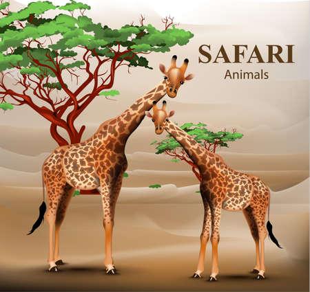 Giraffe safari background Vector. Animals wildlife illustrations