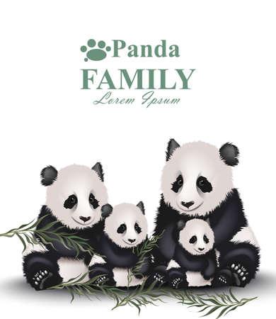 Panda family Vector. Cute animals detailed illustrations