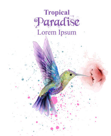 Aquarel zoemende vogel Vector. Tropic paradise kleurrijke vogels. kleurrijke verfvlekken spatten