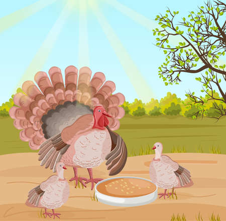 Turkey at the farm Vector. Nature background