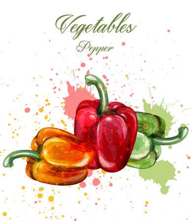 Vecteur aquarelle de poivrons doux. Illustration de légumes colorés juteux Vecteurs