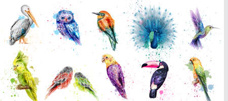 Watercolor birds set Vector. Peacock, owl, pelican, parrot and humming birds collection