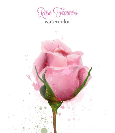 Watercolor pink rose isolated Vector card. Wedding invitation or save the date template. Beautiful backgrounds