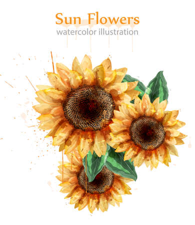 Sunflowers watercolor style isolated on white Vector. Beautiful floral decor template Vectores