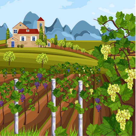 Vineyard growing harvest Vector. Beautiful summer fields and mountains views  イラスト・ベクター素材