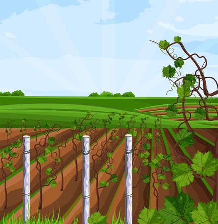 Vignoble de plus en plus vecteur de récolte. Belles vues sur les champs d'été et les montagnes