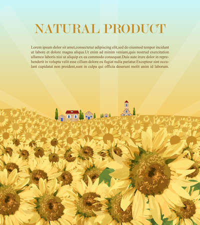 Sunflowers field background Vector. Summer beautiful card Vecteurs
