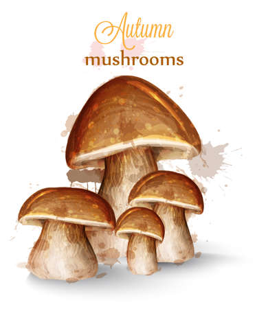 Mushrooms watercolor Vector isolated on white backgrounds