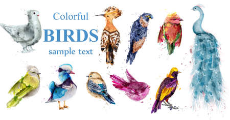 Colorful tropic birds set Vector watercolor. Beautiful peacock, dove, hoopoe, mandarin duck Ilustração