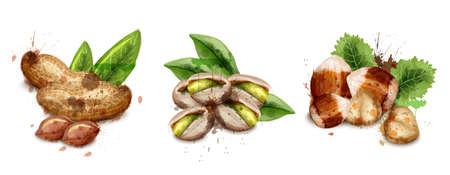 Nuts set watercolor Vector. Pistachio, hazelnut and peanuts illustration Ilustração Vetorial