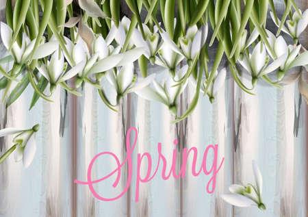 Snowdrops flowers Vector watercolor. Spring Summer trendy card