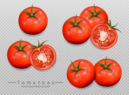 Tomatoes isolated Vector realistic. Detailed 3d illustration template for label, icon, product placement