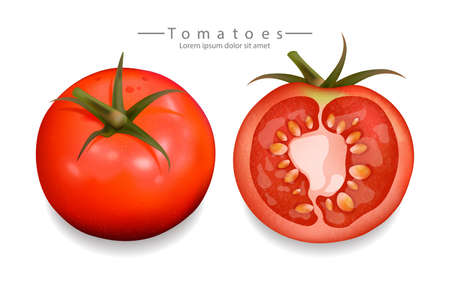 Tomatoes sliced isolated Vector realistic. Detailed 3d illustration template for label, icon, product placement