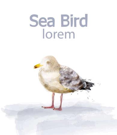 Seabird vector watercolor. cute bird isolated on white illustration