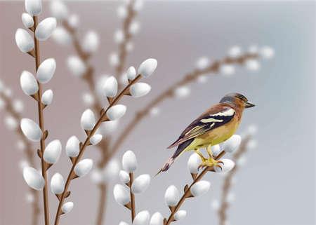Hermoso vector de ramas de gorrión y sauce. Tarjeta de primavera.